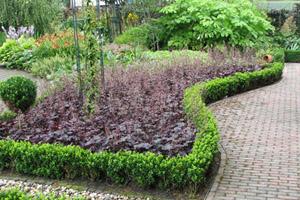 გამწვანება მცენარეების მოვლა